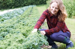 Woman working in field of leafy greens